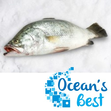 Ocean Best Barramundi whole fish per 1 kg (average weight 1.2 KG )